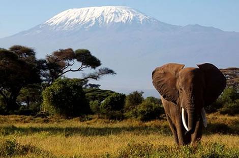 Amboseli Sundowners