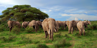 Best Game parks and Reserves in Tanzania