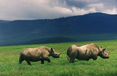 tanzania safari package